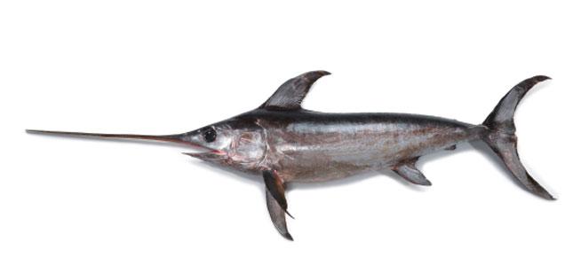Espadarte sværdfisk