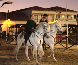 Portugisiske Lusitano heste