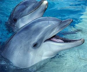 Svøm med delfiner i Zoomarine i Algarve