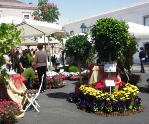 Blomsterfest i Cascais