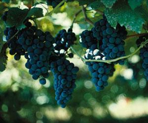 Portugiske druer